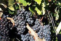 Instagram / Retrouvez nous sur https://instagram.com/winetourbooking/