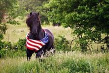 Patriotic Horses / Happy Independence Day! Here are some patriotic themed photographs and art pieces of horses. Enjoy!