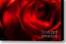 ROSES, the flower of Love / by Jayne Logan