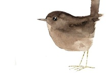 Birds, Our Feathered Friends  / I love all birds. I especially love sparrows, chickadees and robins. / by Jayne Logan