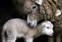 Animals, beautiful wonderful animals / Vegetarian and I cherish all animals / by Jayne Logan