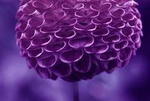 Purple Jayne / yummy purples, need i say more? / by Jayne Logan