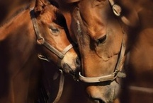 Horses I Adore Horses / I love all animals. I detest all Rodeos and rodeo cowboys are, in my opinion, pussies. I prefer the romance of real cowboys. Horse racing: horses were not put on this earth to run in circles endlessly just so People can make or win or lose a few bucks.  / by Jayne Logan