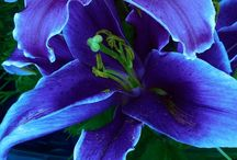 Flowers / Colori incantevoli