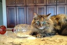 Bombay Pets / Our wonderful Bombay fans sent us pictures of their pets with Bombay product during our Bombay Pets contest!
