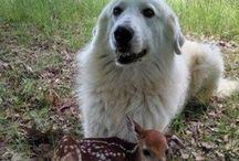 Animali / Cani orche...ANIMALI