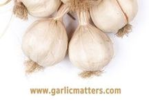 EVERYTHING ABOUT GARLIC / GARLIC 101 - How to cook, grow, cultivate and deal with garlic. Garlic health benefits  - extensive knowledge base for all garlic lovers, growers, users and dependents:) FOR  GARLIC RECIPES HEAD TO www.garlicmatters.com. (Easy , homemade roasted garlic, garlic bread, butter, salt and many vegetarian and regular dishes recipes.)