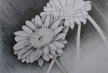 Flora drawings / A collection of flora drawings I have done. http://www.michellesiepker.co.za