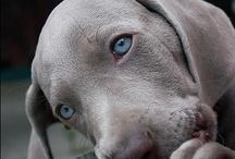 Doggies / Man's best friend.