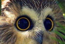 Owls / Just because they are so cool...! #owls