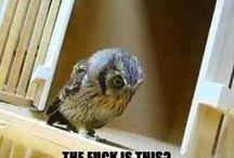 fun n animals / Funny pics and some adorable animals.
