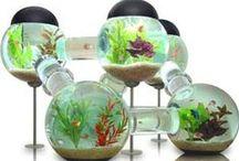 All Things Fishy - Aquarium + Terrariums / Fishy friends and cool aquarium designs that will ROCK YOUR WORLD! #aquariums #aquariumdesigns #terrariums