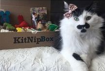 KitNipBox Cat Family / These kitties love their monthly box of cat treats, toys, and other goodies! Sign up at KitNipBox.com. We donate a portion of our proceeds to hundreds of animal welfare causes, so you're supporting cats in need with every box!