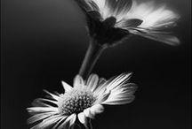 Black & White Still Life