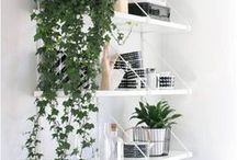 Indoor Plants / A home isn't complete without some greenery and real live plants to keep the air fresh and clean. Here are some of my favourite plants and how people have styled them in their homes.