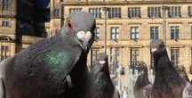 Pigeons / A collection of visual reference for characters, settings and ideas