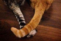 Koty / Moje zwierzaki ;)