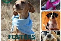 Fur Friends in Need... / Blessed Are Those Who Care For The Animals ... Please help if you can.