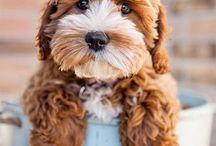 Puppy-dog Smiles!