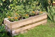 Home & Garden / Home improvements, decorating tips, gardens & gardening and more! / by Ducks 'n a Row
