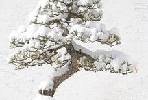 Bonsai / by Susan James