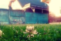 Creaciones / Fotos hermosas editadas con Picmonkey :)