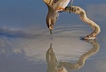 Wildlife and Wild Birds / Anything of wildlife and wild birds photographie