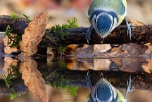 Birds / Photographie of birds