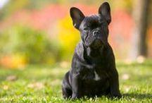 mans bestie! miss my dogies!!!