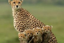 Animales Majestuosos