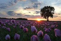Woman in Field of Poppies / Insprationen für Foto-Shooting