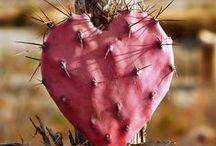 ♥ Cactus Love ♥