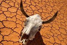 Desert Dramatic Color