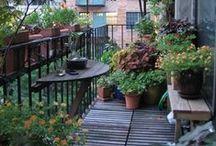 Balcony gardening / Let the city breathe!