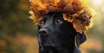 Królowe Jesieni
