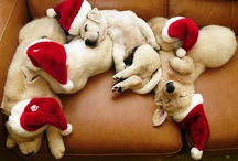 Christmas Furry Friends / by Cynthia Chauncey