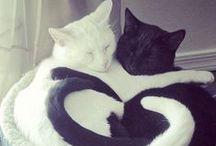 = ^ . . ^ = CATS - KITTY