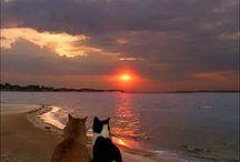 = ^ . . ^ = CATS - So Cute!