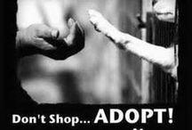 = ^ . . ^ = Adopt Don't Shop
