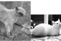 = ^ . . ^ = CATS - Before & After