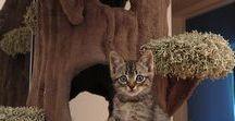 = ^ . . ^ = CATS - DIY Fun
