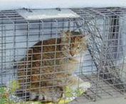 = ^ . . ^ = CATS - TNR Trap Neuter Release