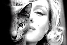 = ^ . . ^ = CATS - with Famous/Owners