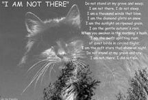 = ^ . . ^ = CATS - In Loving Memory