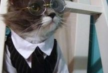 = ^ . . ^ = CATS - Wearing Glasses