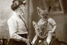 = ^ . . ^ = CATS - Wearing Clothes