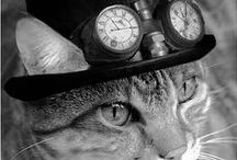 = ^ . . ^ = CATS - Wearing Hats