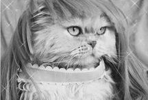 = ^ . . ^ = CATS - Wearing Wigs