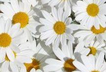 Flowers / by Lucie Nixon
