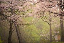 High Park in Spring / The long awaited Spring 2015.